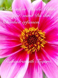 """Einfach nur schön sind diese Blüte und die Weisheit von Rabindranath Tagore: """"Nicht indem Du die Blüte zerzupfst, wirst Du ihre Schönheit erfassen."""" #umweltschutz #naturschutz"""