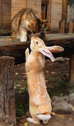 gatto e coniglio = gatiglio