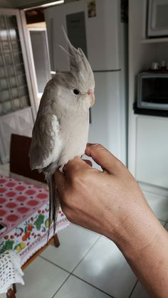 Adorable~~ Like Animals, Cute Little Animals, Nature Animals, Cute Funny Animals, Animals And Pets, Baby Animals, Cute Birds, Pretty Birds, Beautiful Birds