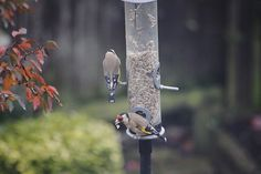 #birdfeeder