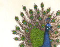 Grand Peacock Archival Print ~ Lisa Congdon