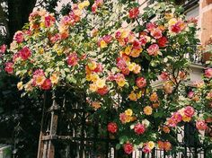 Garden - FannyVanmansart