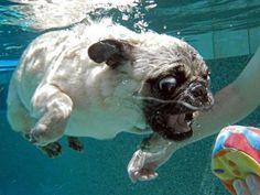 love the underwater photos
