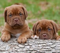 Free Cute Puppies Wallpapers and Screensavers - See more cute puppy pictures and dog training tips at TrainMyPuppies.com