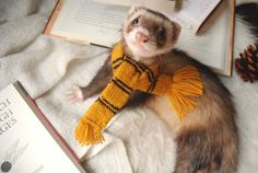 """the-book-ferret: """"""""Those patient Hufflepuffs are true and unafraid of toil."""" ― J.K. Rowling """""""