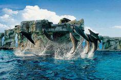 Porpoise pod, jump in synchro