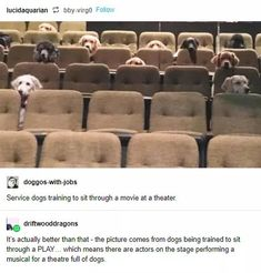 Enjoy the meme 'It whould be a honner to perform for them' uploaded by Meme. Memedroid: the best site to see, rate and share funny memes! Cute Funny Animals, Funny Cute, Cute Dogs, Hilarious, Wtf Funny, Stupid Funny, Service Dog Training, Service Dogs, Tumblr Funny