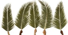 5 Things about Palm Sunday that Remind Us Christ is King