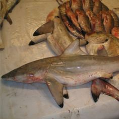 Animal+Thought+to+Be+Extinct+Found+Alive | shark-species-thought-to-be-extinct-found-in-fish-market_1.jpg