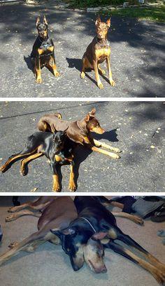 Dogs Best Friends Make Human Troubles Seem Trivial -  #cute #dogs #friends #puppies