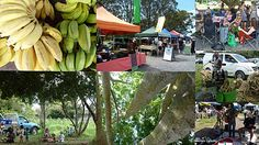 Farmers Market, Byron Bay NSW