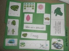 Pond lapbook - preschool - great for summer