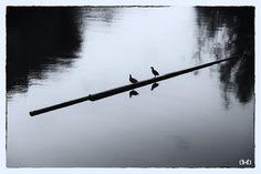 Birds I - Gravensteen (Gent)