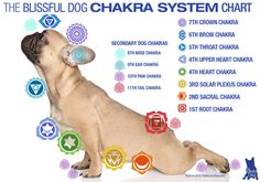 Here is a Dog Chakra chart. It is useful to know where chakras (energy centers) are located on all animals. Distant reiki can be sent to the chakras. Reiki practitioners can also target these energy centers when giving reiki in person. Chakra Sacral, 6 Chakra, Chakra Chart, Chakra Healing, Chakra Symbols, Plexus Solaire, Animal Reiki, Les Chakras, Mudras