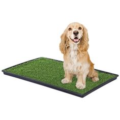 Prevue Pet Products Tinkle Turf Replacement Turf Large 5 - Overstock Shopping - The Best Prices on Prevue Pet Products Other Pet Training