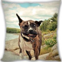 This is american staffordshire terrier vs pitbull, Brown And Black Short Coated Medium Breed Dog. This is a custom Funny dog pillow. Looks great gift.