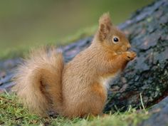 beautiful photography of animals | Beautiful Animal 067 - Animals | Images, Wallpaper & Ecard