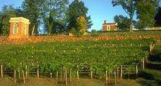 The Vineyard  - Garden Ideas