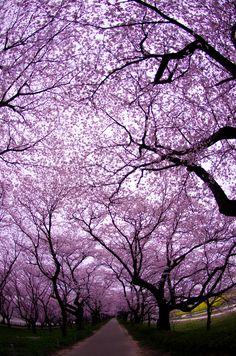 Más tamaños | Gongendo, Saitama, Japan | Flickr: ¡Intercambio de fotos!