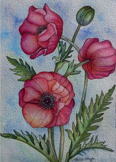 Papaver Rhoeas- A study in Watercolour, Ink & Acrylic by Laura Leeder www.lauraleeder.com Image Size 10.5 x 9 inches apx.