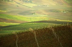 Wine country, Sicily