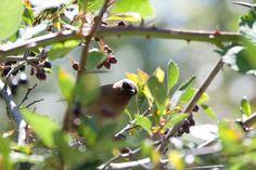 Vögel von Obstbäumen verscheuchen