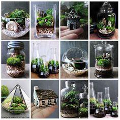 Terrariums as gifts #minijardines