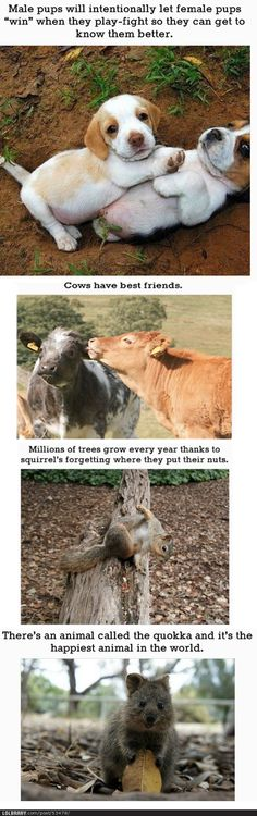 Funny pictures about Four Cute Animal Facts…. Oh, and cool pics about Four Cute Animal Facts…. Also, Four Cute Animal Facts… photos. Cute Funny Animals, Cute Baby Animals, Funny Cute, Animals And Pets, Super Funny, Wild Animals, Nature Animals, Hilarious, Animal Facts