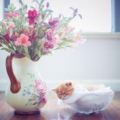 Beautiful cat images Beautiful Cat Images, Most Beautiful, Cats, Home Decor, Gatos, Decoration Home, Kitty Cats, Room Decor, Interior Design