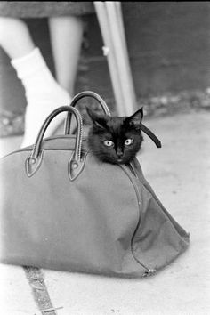 Ralph Crane - Black Cat Auditions In Hollywood - 1961