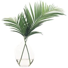 NDI Palm Leaves Odd Glass Bubble Green Gn053 (467 510 LBP) ❤ liked on Polyvore featuring home, home decor, floral decor, artificial flora, flower stem, flower home decor, glass flower stems and glass home decor