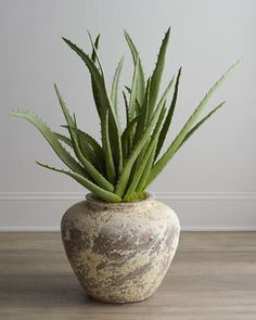 Aloe vera, a great gift, easy to grow, useful, beautiful. We have gorgeous large specimens that we grew ourselves