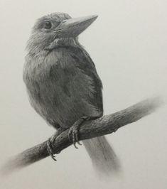 담아감 Graphite Drawings, Drawing Sketches, Pencil Drawings, Pencil Drawing Inspiration, Wildlife Art, Black And White Pictures, Cartoon Drawings, Drawing Reference, Fantasy Art
