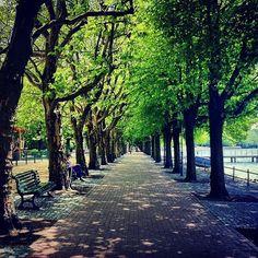 Tegeler See, Greenwich Promenade #Berlin