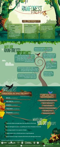 "Infographic: ""Rain Forest Facts"" 