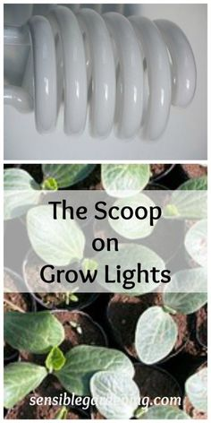 The Scoop on Grow Lights with Sensible Gardening. Types of grow lights for indoor gardening.