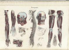 Jean-Baptiste Sarlandière Anatomie méthodique
