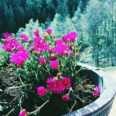 #fivesneakers #emlékeketgyűjtünk #ruhpolding #5tornacsuka #wecollectmemories Plants, Travel, Instagram, Viajes, Destinations, Plant, Traveling, Trips, Planets