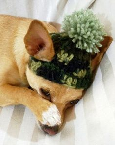 Dog Crochet Hat, Hunting green Camouflage,XS or Small dog or cat with pom-pom