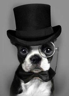 1920's: Aston Ring Bearer. Instead of making groom wear 1920's top hat.