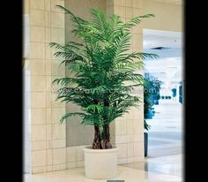 Areca Palm Tree - Tranquility, simplicity and sophistication. A complete package