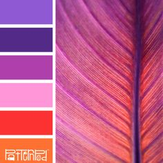 Fuchsia Foliage #patternpod #patternpodcolor #color #colorpalettes