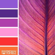Fuchsia Foliage #patternpod #patternpodcolor #color #colorpalettes