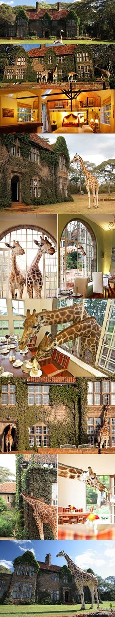 Giraffe Manor in Kenya - Where the giraffes stick their necks through the windows and eat dinner with you #Hotel