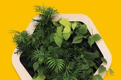 Gromeo™ a self-watering living wall for homes & small spaces.