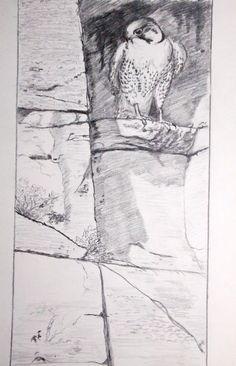 Canadian Wildlife Artist featuring original works of art and prints Original Artwork, Original Paintings, Canadian Wildlife, Peregrine Falcon, Wildlife Art, Cliff, Art For Sale, Hanger, Gallery