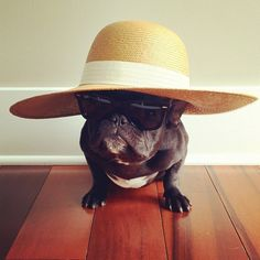 Meet Trotter, the Most Fashionable Pup on Instagram