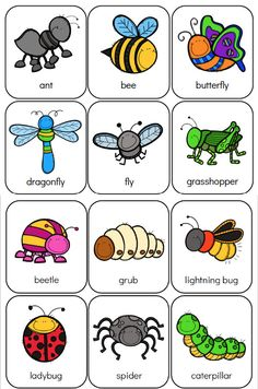 Here's Your Free Bug Flashcards