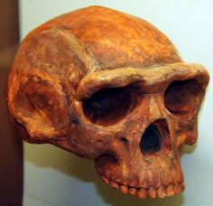 Early Humans Lived in China 1.7 Million Years Ago -- The human lineage evolved in Africa, with now-extinct species of humans dispersing away from their origin continent more than a million years before modern humans did. Scientists would like to learn more about when and where humans went to better understand what drove human evolution.  Researchers investigated the Nihewan Basin, which lies in a mountainous region about 90 miles (150 kilometers) west of Beijing. It holds more than 60…