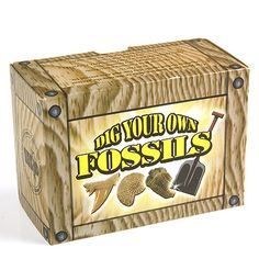 Fossil Dig Kits | Dig Your Own Fossils Kit - Crystal Novelties & Gift Bags - Healing ...